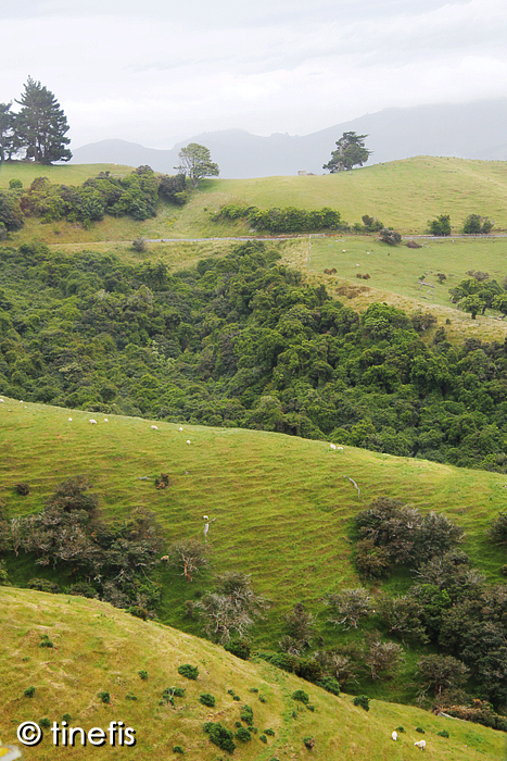 Lite fin natur i Otago Peninsula.